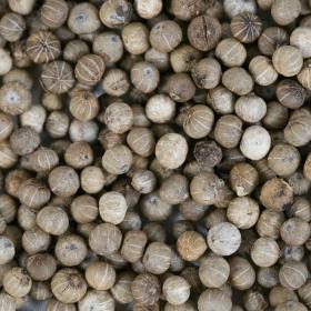 grains poivre de Kampot blanc